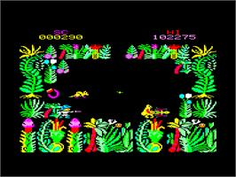In game image of Sabre Wulf on the Amstrad CPC.