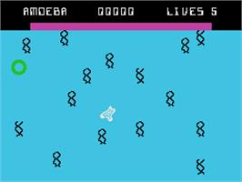 In game image of Evolution on the Coleco Vision.