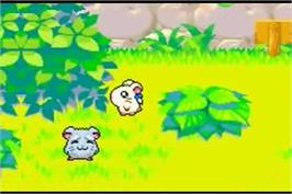 In game image of Hamtaro Rainbow Rescue on the Nintendo Game Boy Advance.