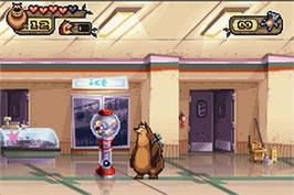 In game image of Open Season on the Nintendo Game Boy Advance.
