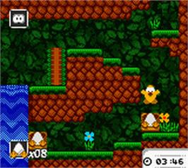 In game image of Toki Tori on the Nintendo Game Boy Color.