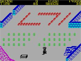 In game image of Pedro on the Sinclair ZX Spectrum.